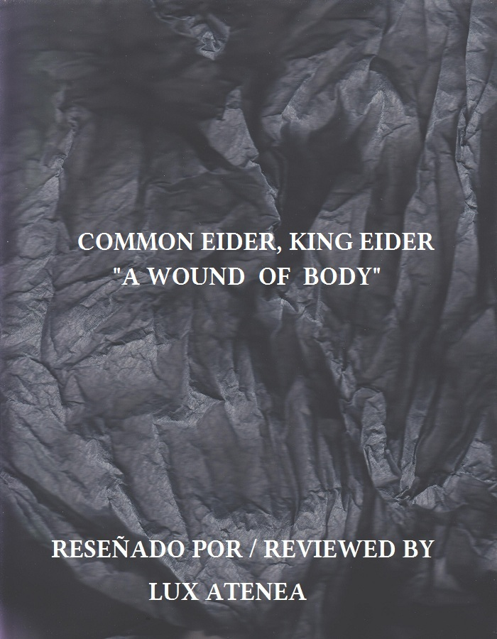 COMMON EIDER, KING EIDER - A WOUND OF BODY