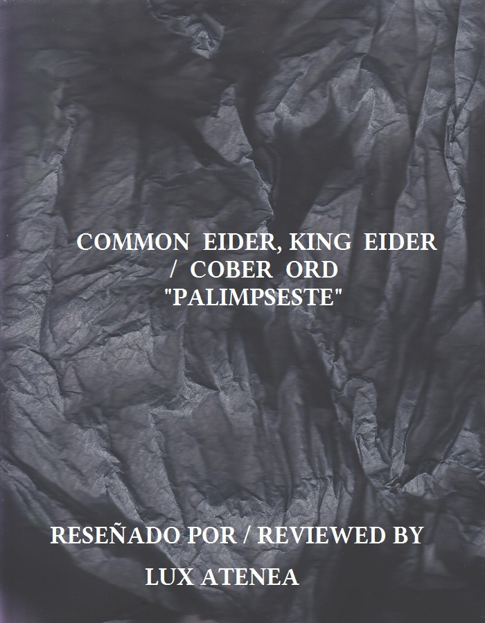 COMMON EIDER KING EIDER COBER ORD - PALIMPSESTE